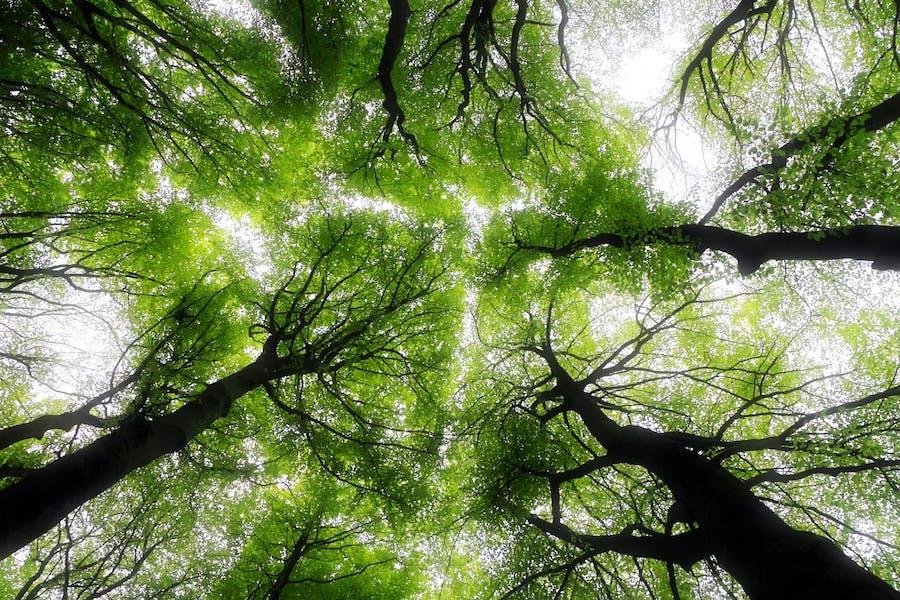 economía verde desarrollo sostenible